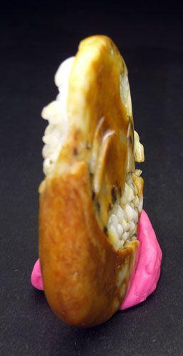 老鼠吃玉米图片 转基因玉米的鉴别图片