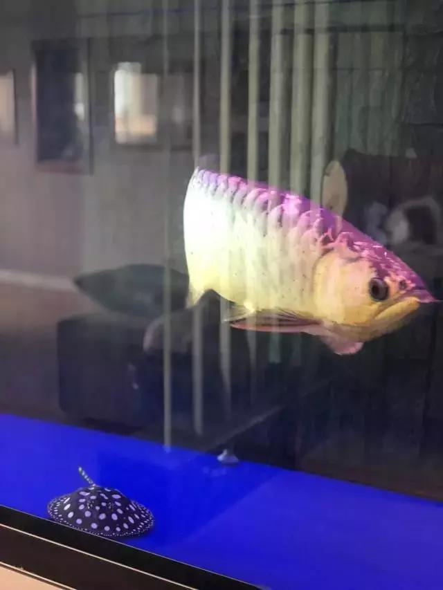 冯钤:谈谈我心中的鱼